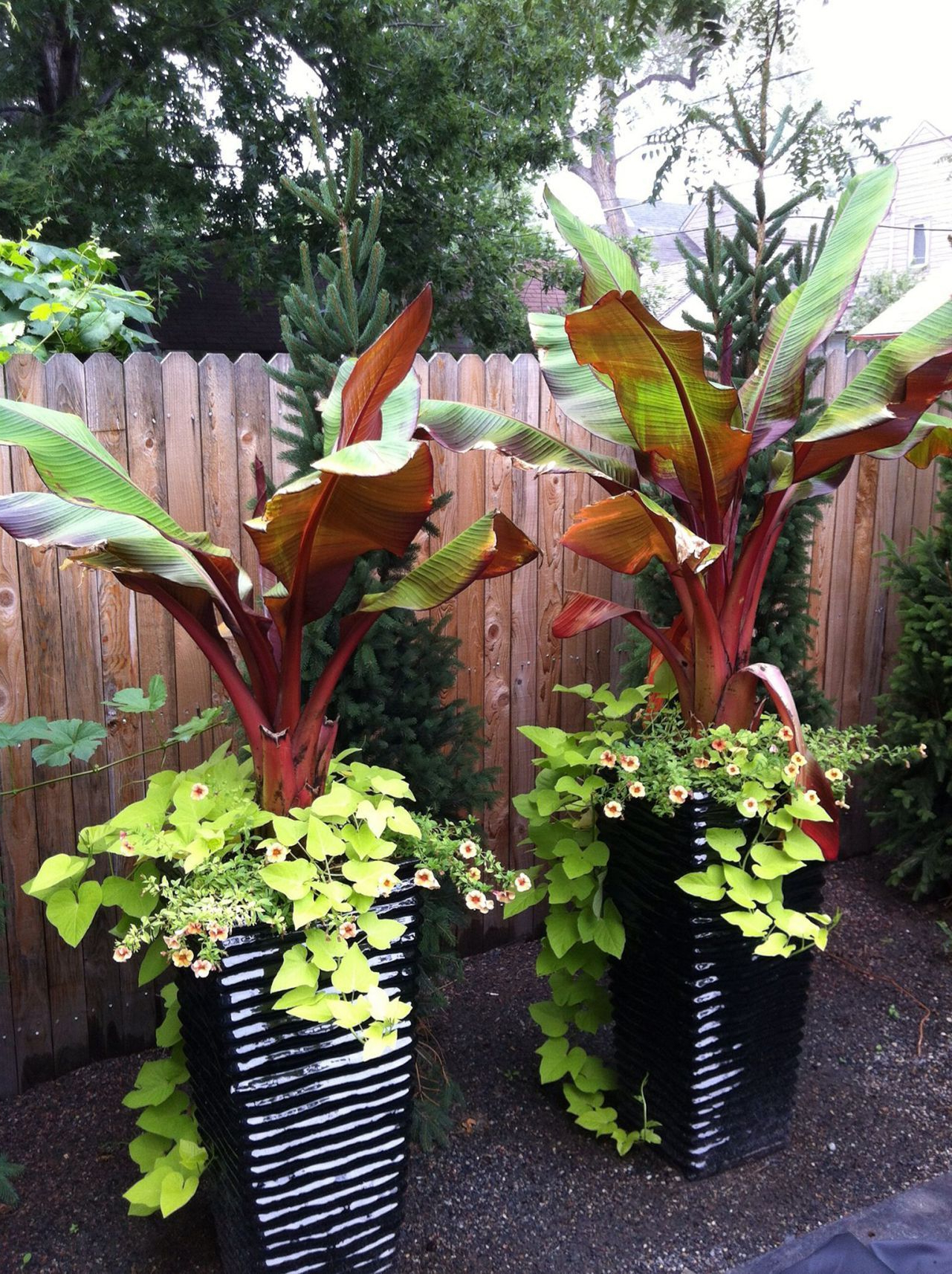 15 Beautiful Tropical Front Yard Landscape Ideas To Make ...
